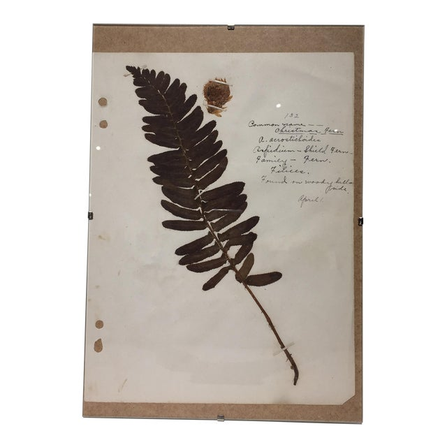 Vintage Christmas Fern Botanical Journal Page - Image 1 of 5
