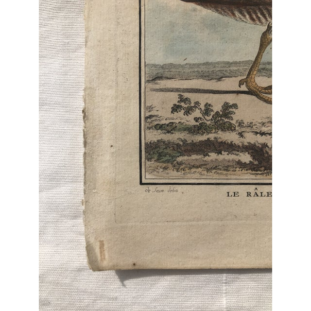 Beige 18th Century French Bird Engraving Signed by Jacques De Sève Featuring a Rale De Terre For Sale - Image 8 of 13