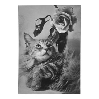 1960s Photograph of a Cat & Roses by R. McNitt