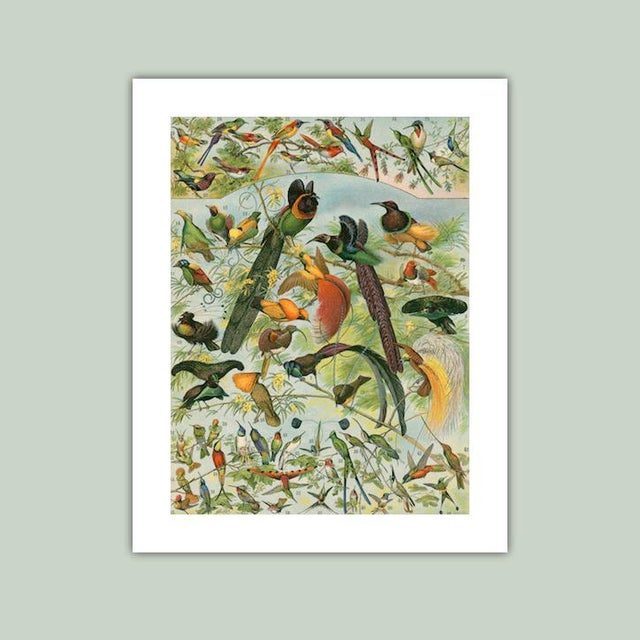 Antique 'Hummingbirds & Friends' Archival Print For Sale - Image 4 of 4