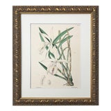 Image of 19th Century Antique Lithograph Orchid Flowers For Sale