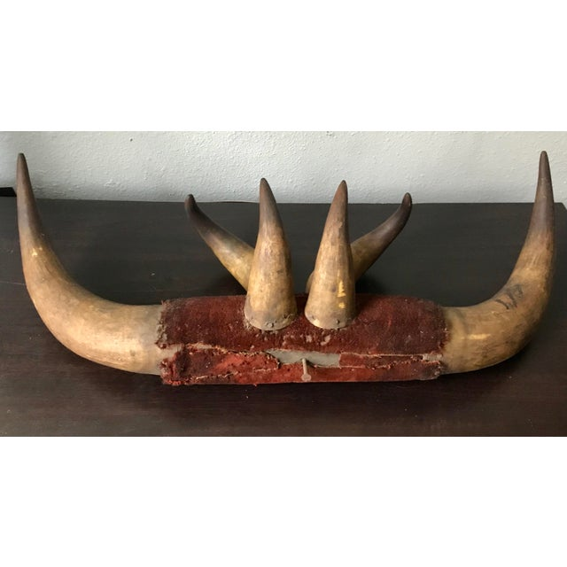 Antique Multiple Ox Horns Decorative Oddity Wall Mount For Sale - Image 4 of 7