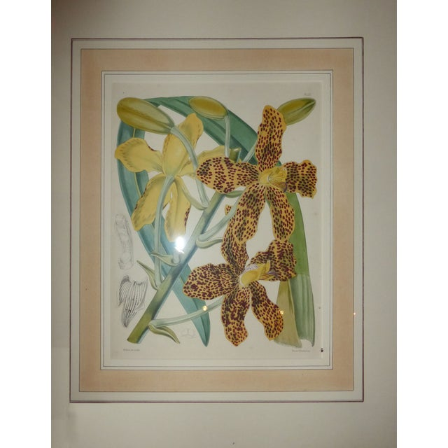 Hand Colored Orchid Engravings - Set of 4 - Image 2 of 5