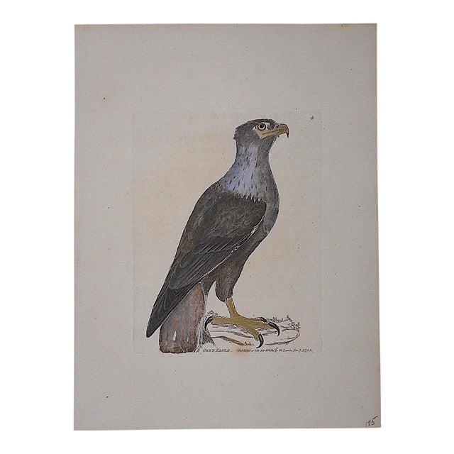 Antique 18th Century Bird Engraving - Image 1 of 3