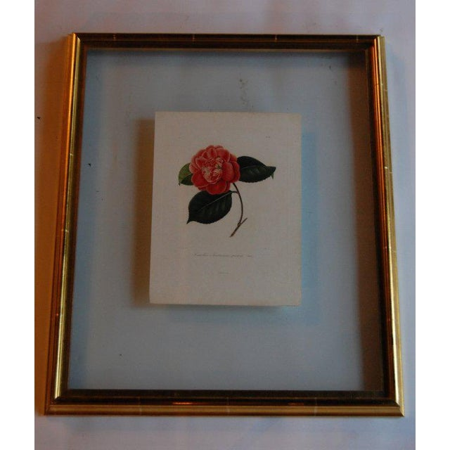 Four j.j. Jung Camellias Pressed Between Glass For Sale In Savannah - Image 6 of 9