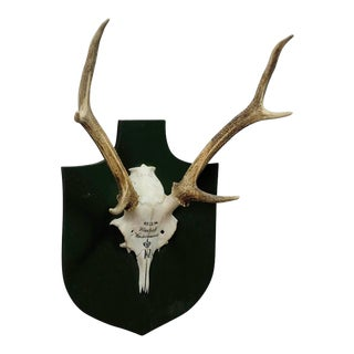 Nice Black Forest Deer Trophy From Salem - Germany, Kleeholz 1956 For Sale