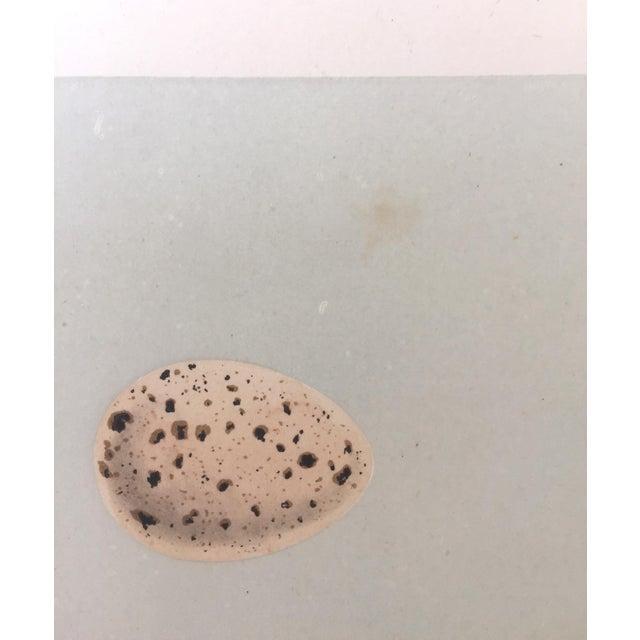 Glass Framed Antique Morris Egg Prints - A Pair For Sale - Image 7 of 8