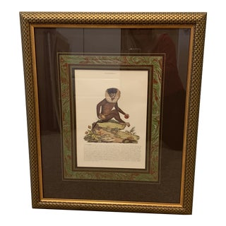 Vintage English Mid-century Framed Animal Print For Sale