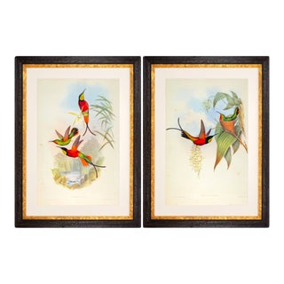 1990s John Gould Framed Prints, Hummingbird (Plates 66 & 67) - a Pair For Sale