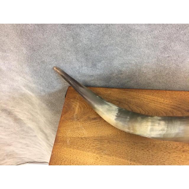Vintage Longhorn Mounted Steer Horns - Image 5 of 11