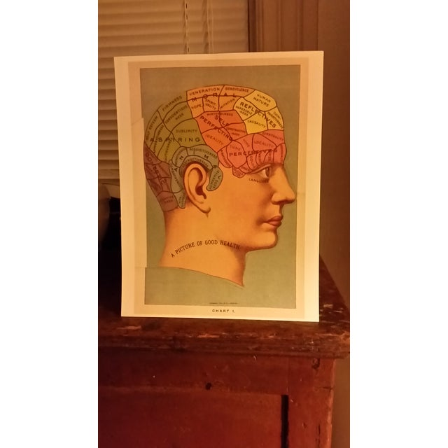 Phrenology Head Chart Reprint - Image 5 of 5