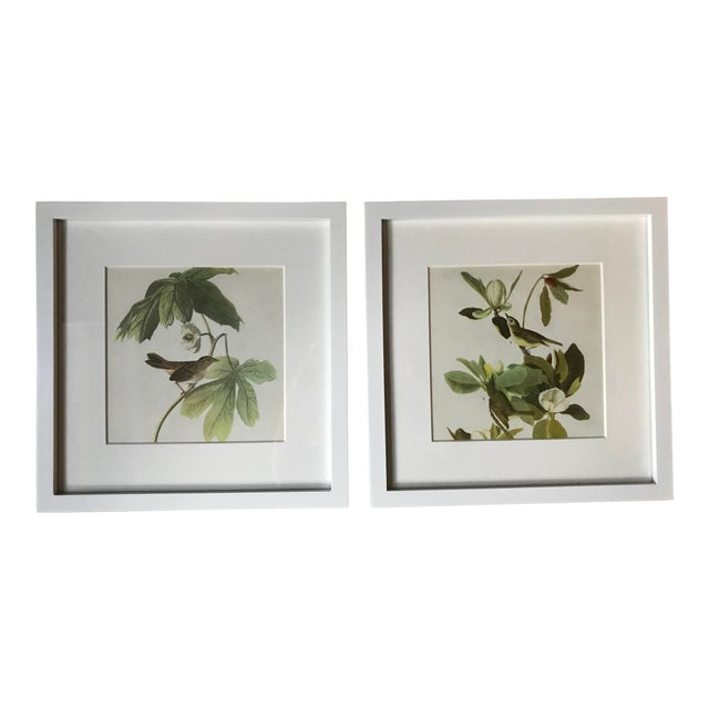 Framed Vintage Audubon Vireo Prints - a Pair For Sale