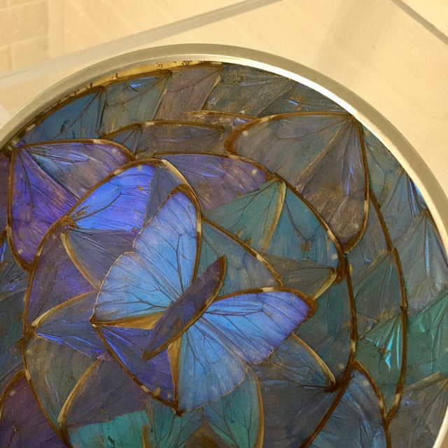 Blue Morpho Butterfly Wing Art For Sale - Image 4 of 7