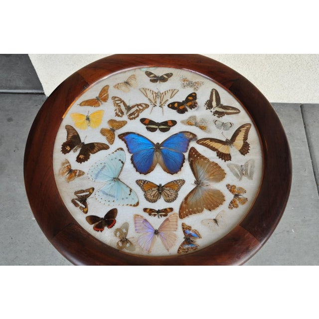 Blue Brazilian Butterfly Table With Monkey Puzzle Wood Base For Sale - Image 8 of 11