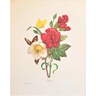Pierre-Joseph Redouté Reproduction Carnation Bouquet Botanical Print For Sale