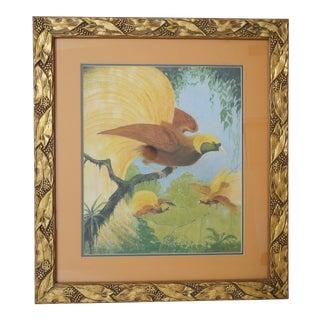 """Vintage 1936 Allen L Pearson """"Lesser Birds-Of-Paradise"""" Pastel Pencil Painting For Sale"""