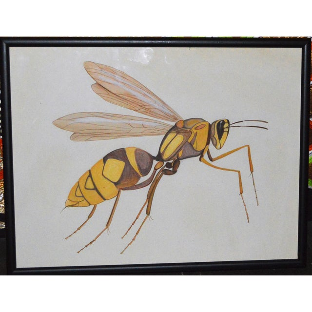 Insect Ant Pencil Paper Framed Art Still Life Painting Drawing Signed Payne For Sale - Image 12 of 12