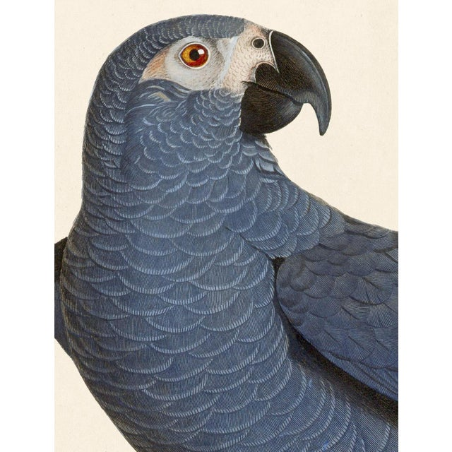 Jacques Barraband Grey Parrots Framed - Set of 4 For Sale - Image 10 of 12