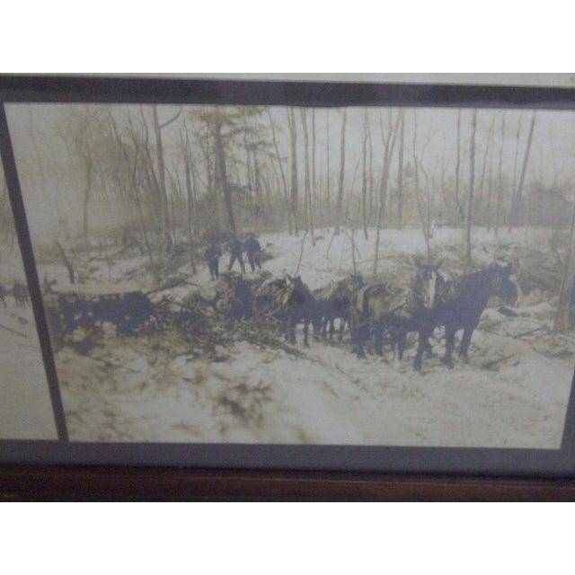 Boyne City, Michigan Logging Photography For Sale - Image 5 of 7