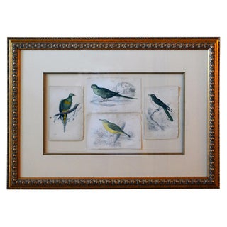 French Antique Framed Hand Colored Prints of Birds in Gold Frame For Sale