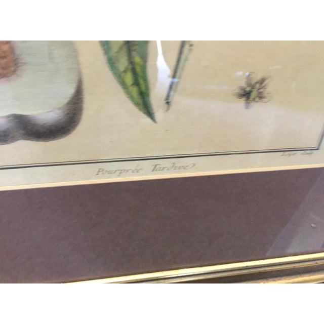 Antique Botanical Prints - Set of 3 For Sale In San Francisco - Image 6 of 9