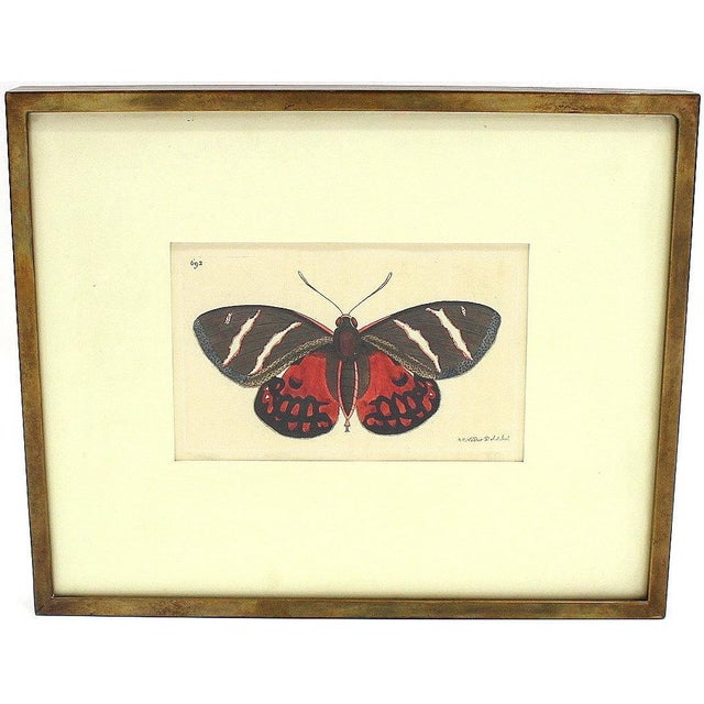 R.P. Nodder 1815 Butterfly Etching, Original For Sale