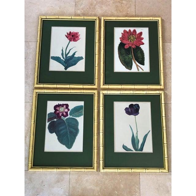 Vintage Botanical Prints - Set of 4 For Sale In Los Angeles - Image 6 of 6