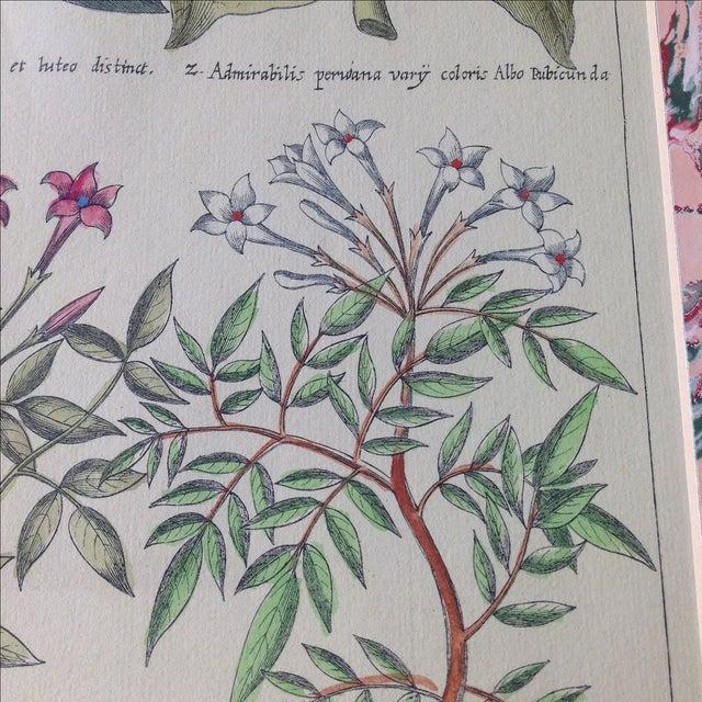 Vintage John Richard Botanical Print - Image 6 of 11