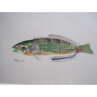 19th C Original Fish Watercolor For Sale