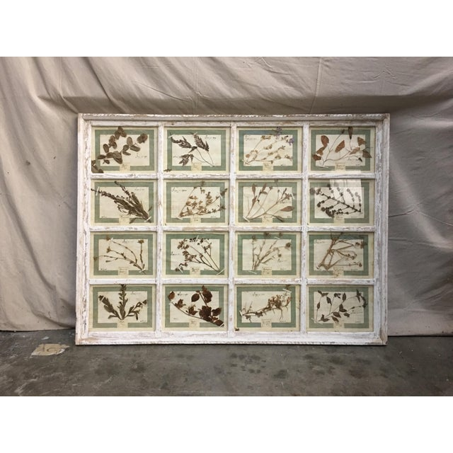 Vintage Italian Framed Botanical Herbarium Wall Hanging For Sale - Image 11 of 12