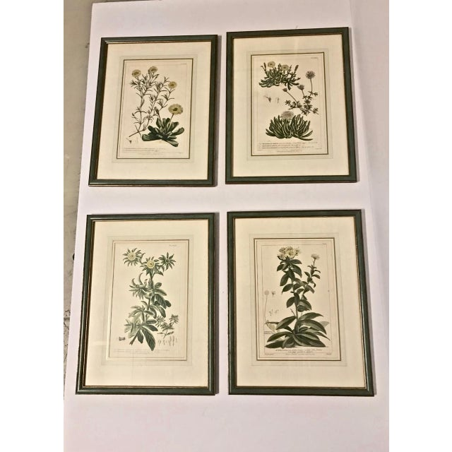 18th C. Botanical Engravings - Set of 4 For Sale - Image 10 of 10