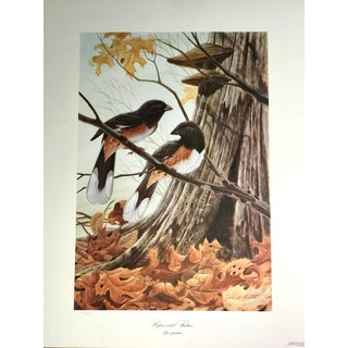 """Rufous-Sided Towhees"" Signed Limited Edition Print by John A. Ruthven For Sale"