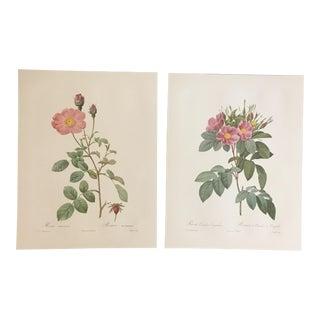 Pair of Botanical Prints After Pierre-Joseph Redouté