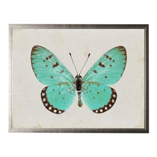 Turquoise Butterfly For Sale