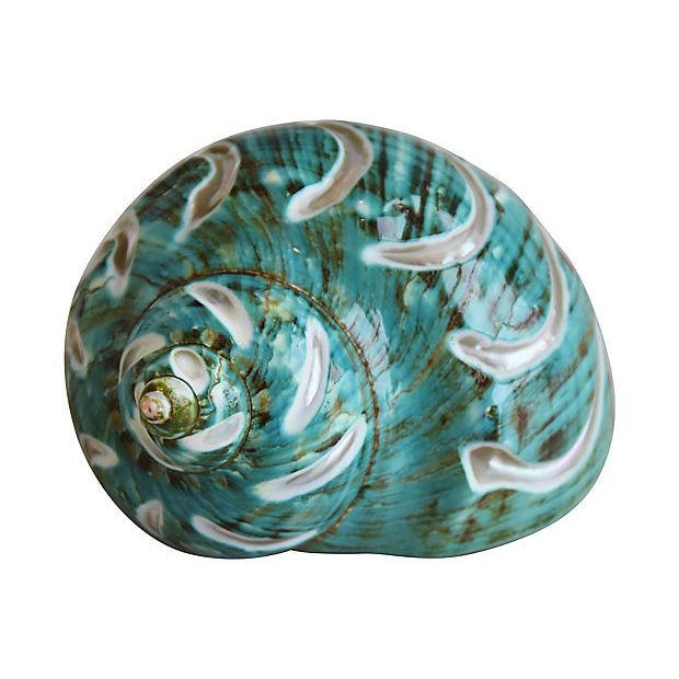 Ivory, Jade & Turquoise Seashells - Set of 3 For Sale In Los Angeles - Image 6 of 10