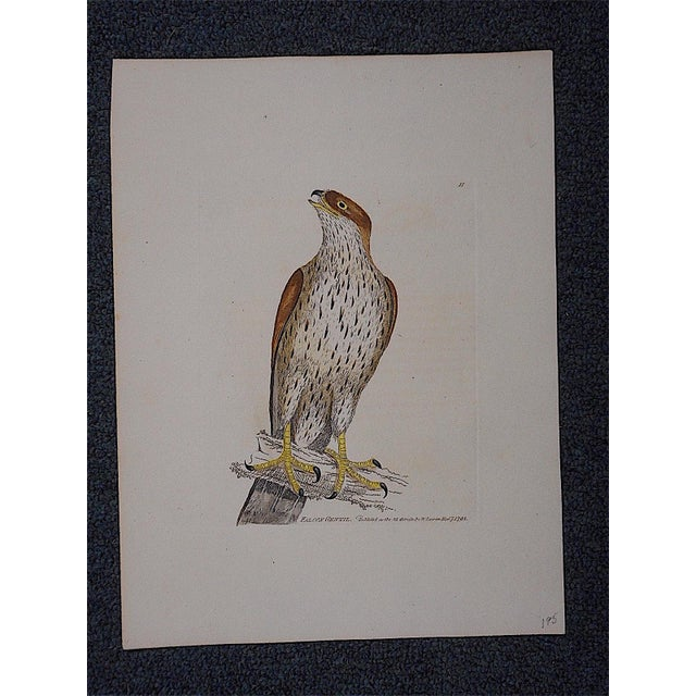 Rustic Antique 18th Century Bird Engraving For Sale - Image 3 of 3