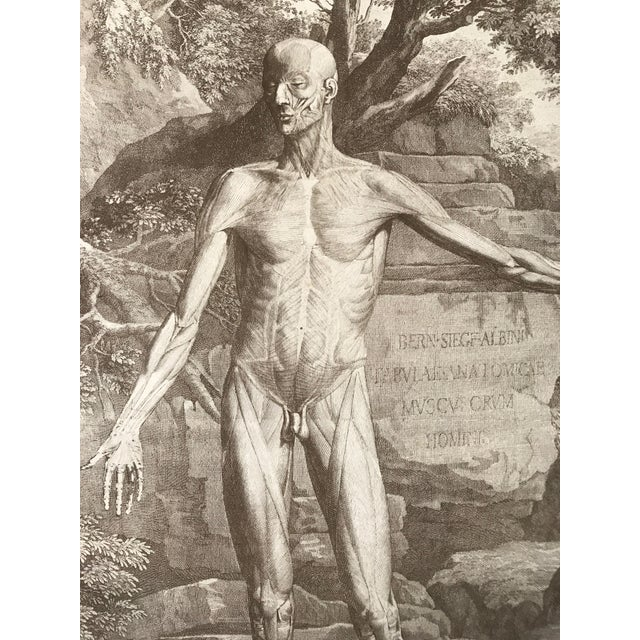 Realism Antique Anatomical Engraving by Jan Wandelaar For Sale - Image 3 of 7