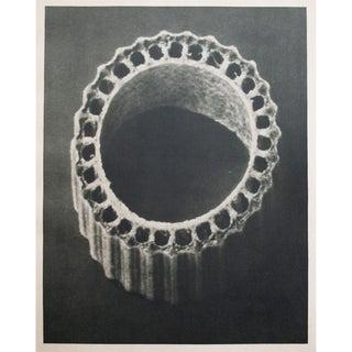 1935 Karl Blossfeldt Two-Sided Photogravure For Sale