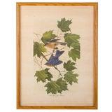 Image of John Ruthven New York State Bluebird Print For Sale