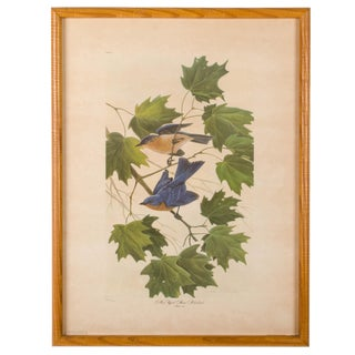 John Ruthven New York State Bluebird Print For Sale