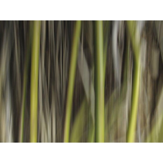 """Ofer Mizrachi """"34"""" Framed Photo Print - Image 2 of 3"""