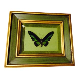 Vintage Gilt Framed Black & Green Rajah Brooke's Birding Trogonoptera Butterfly For Sale