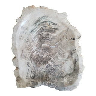 Natural Petrified Wood Catchall Bowl For Sale