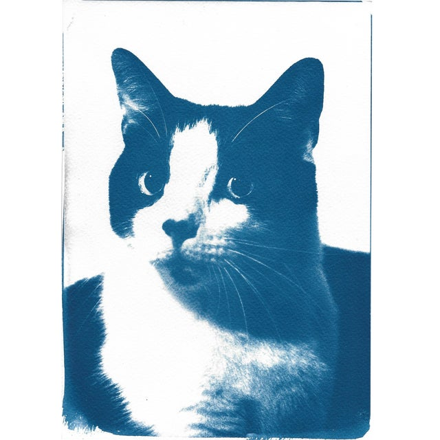 Limited Edition, Cyanotype Print- Cat Portait - Image 1 of 4