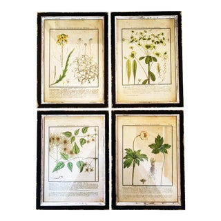 Vintage French Botanical Reproduction Prints by Park Hill Collection, Framed - Set of 4 For Sale