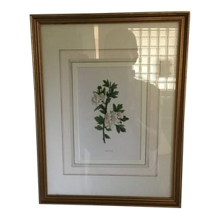 1960s Traditional Framed Painting of Hawthorn