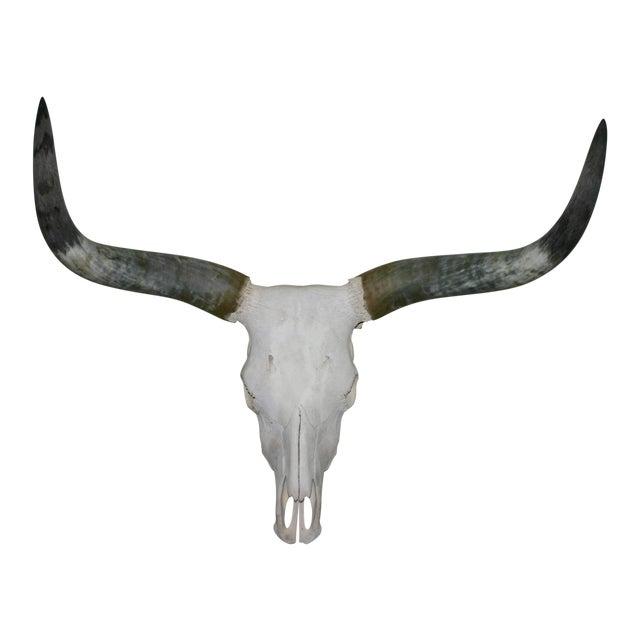 Vintage Mid Century Long Horn Steer Head For Sale