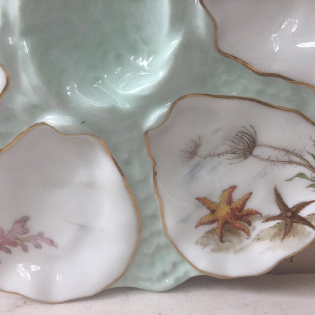 Antique 19th century French porcelain oyster plate with Sea Life pattern (shells,seaweeds,starfish ) signed Limoges New York.