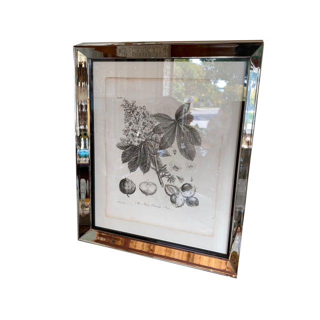 Paper Antique Botanical Prints - Set of Six For Sale - Image 7 of 8