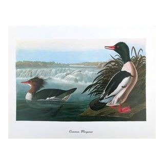 "Authentic Vintage Common ""Merganser Duck Bird & Botanical"" Print by John James Audubon For Sale"
